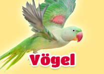 Sortiment Vögel